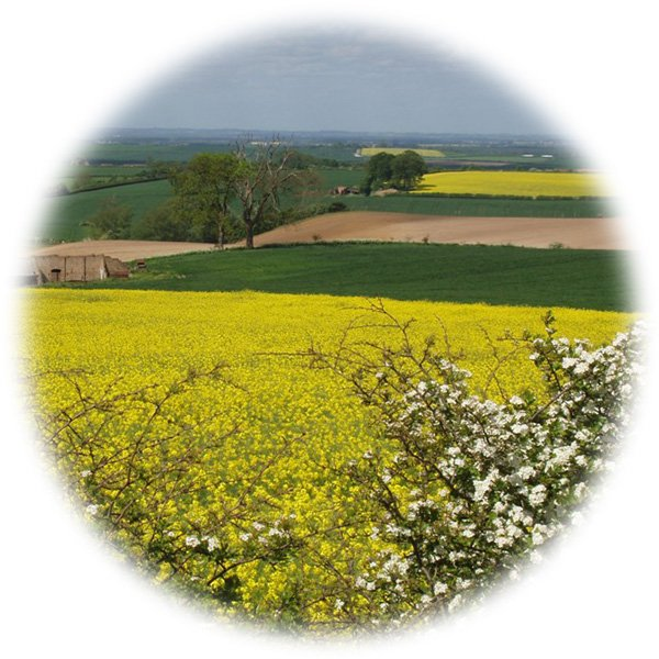 A picturesque view of the countryside including fields of oilseed rape