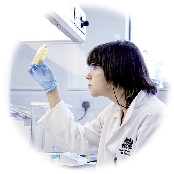 A scientist inspects an agar plate for colonies of bacteria that express a recombinant protein